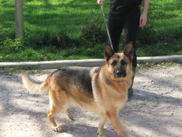 Hammerpond Dog Walks