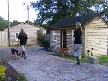 Dog Walking at Hammerpond Kennels