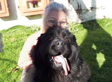 big black dog with owner